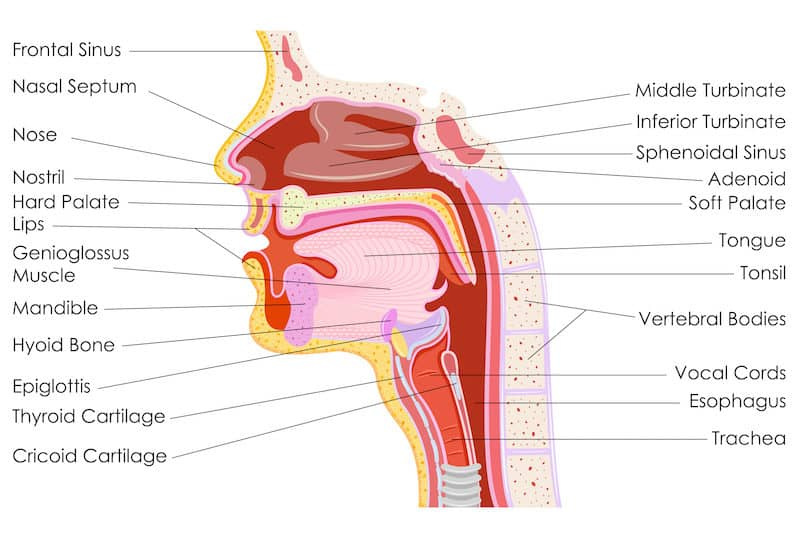 how to take care of your vocal cords for singing howtosingbetter101.com